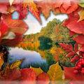 Les feuilles d'automne - 23 octobre 2009