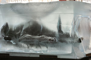 xolo_glace2
