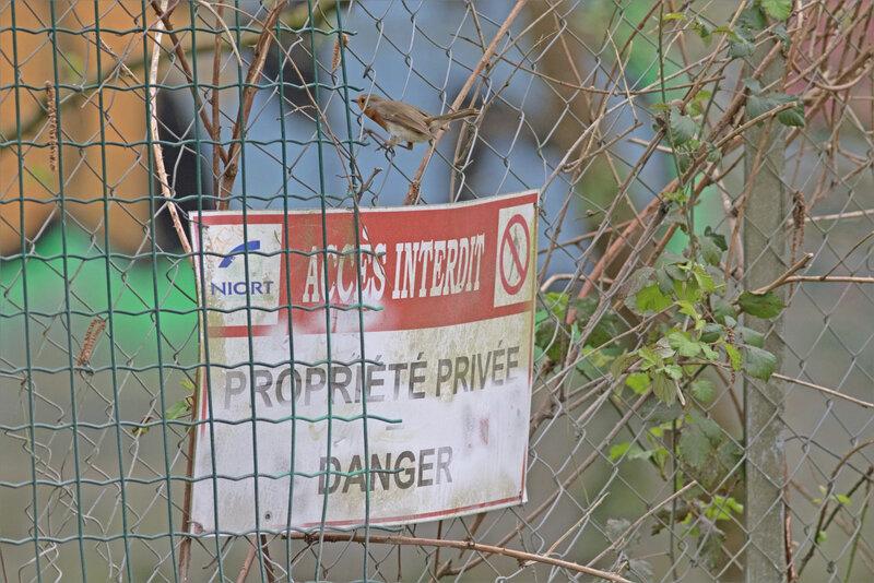 oiseau RG grillage ouvert pancarte accès interdit 260321