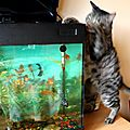 Le rêve de Turtle : avoir accès à l'aquarium