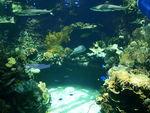 Aquarium_Noum_a_1