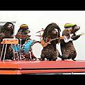 Les marmottes ...de fr3