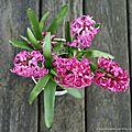 Fleurs de début mars