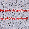 Z-9910 Fête du Parc à Saint-Omer