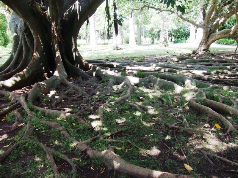 j3 parc racines