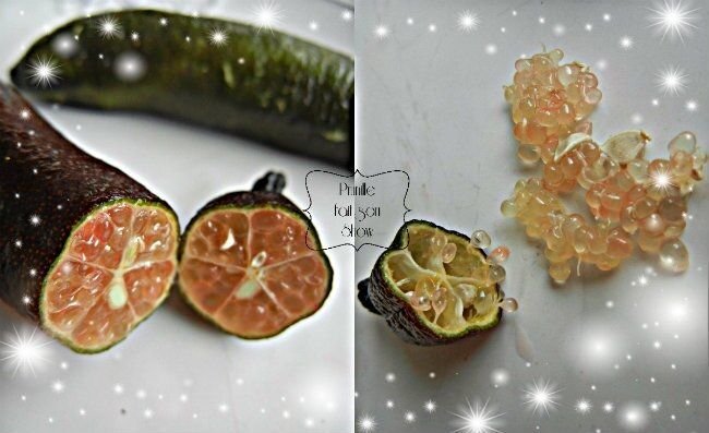 collage citron caviar prunille