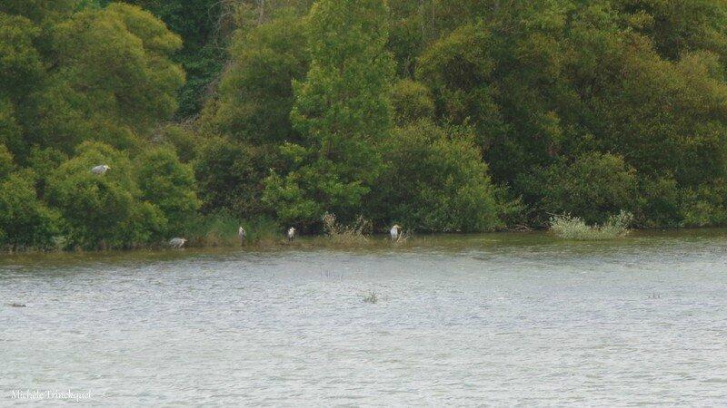 Lac Puydarrieux 14061617