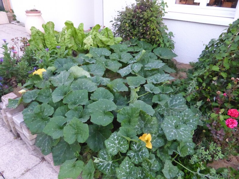 6-courges et courgette (5)