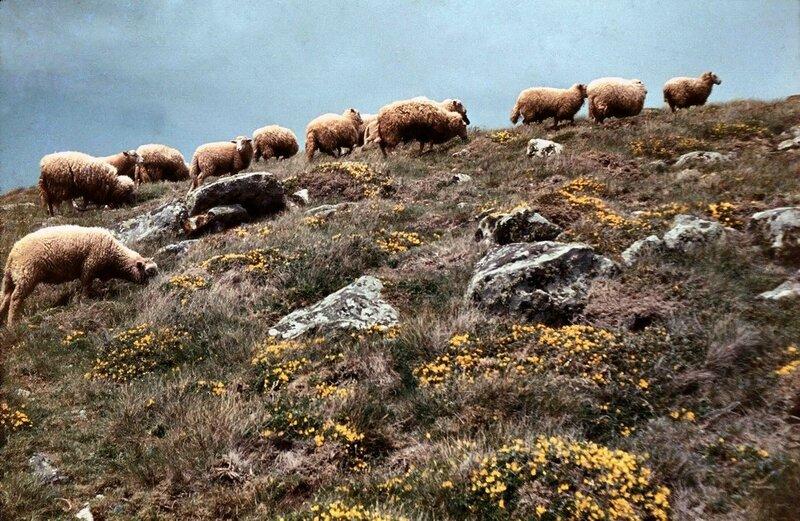 Ch23 - Les moutons de la pointe des moutons 1