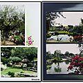 Jardin de saint-adrien - l'olivier et les rosiers