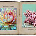 belles photos fleurs valérie parent albertosi