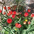 21 - le jour des fleurs chez greenye