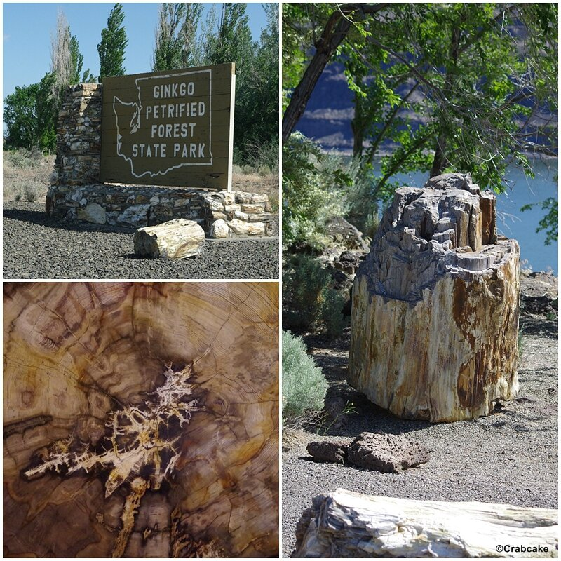 Ginkgo Petrified Forest State Park 2