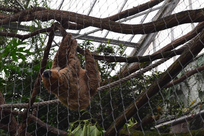 zooparc de beauval (35)