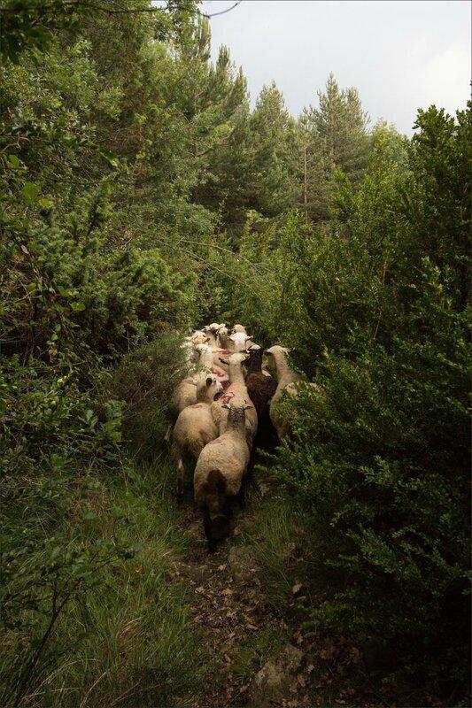 Haut Aragon 110615 CM GA 34 orage sentier moutons