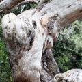 La douleur du bois