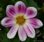 fleur_trianon_5
