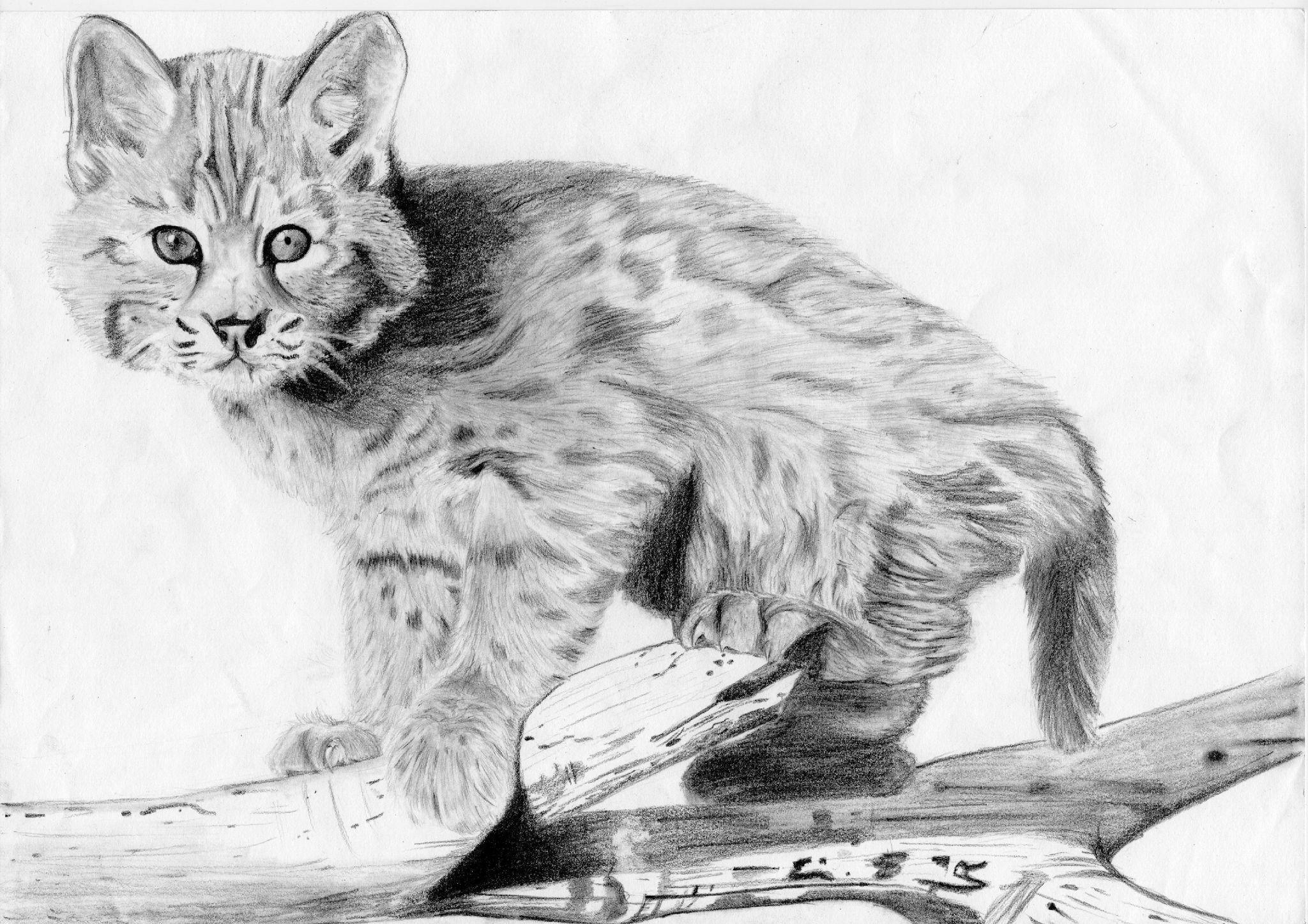 Lynx :) (à partir d'un model) - Manga, Dessin, Je vous ...