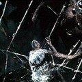 La mouche noire (the fly) de kurt neumann - 1958
