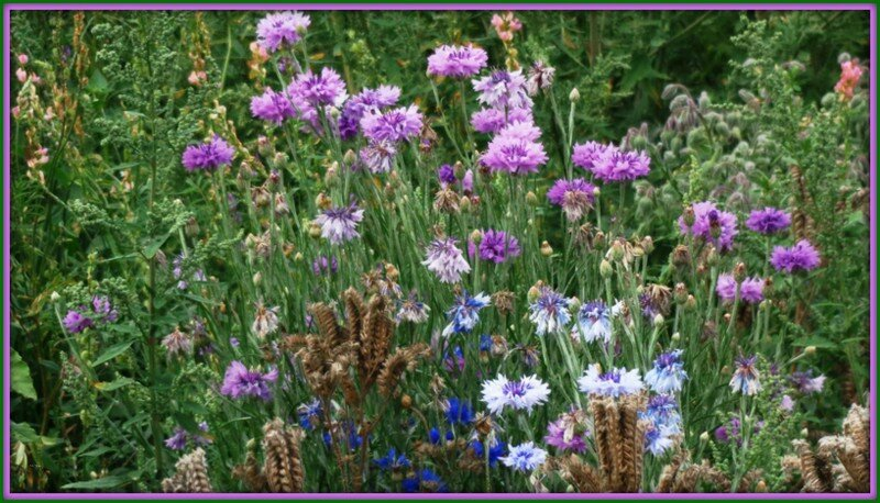 Praire fleurie 11081516