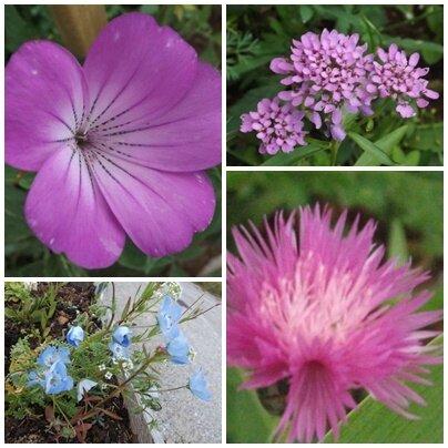 Fleurs du jardin (14)