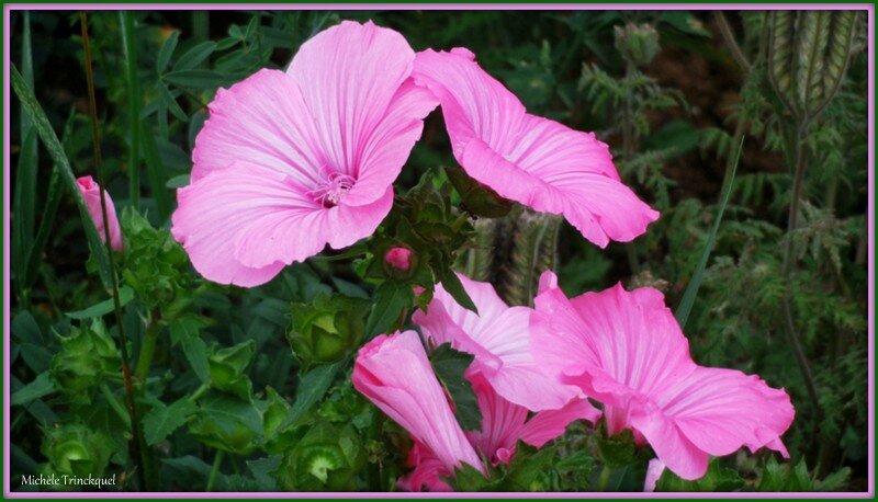 Prairie fleurie 110815