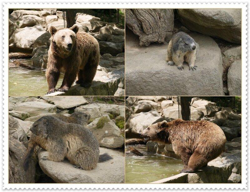 C les marmottes et les ours