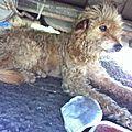 Cookie 1 vivait sous une voiture