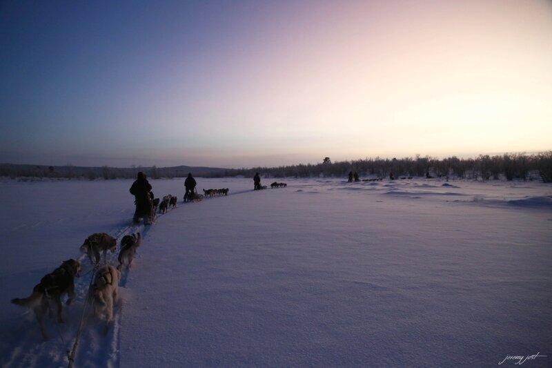 chiens de traineau grand nord