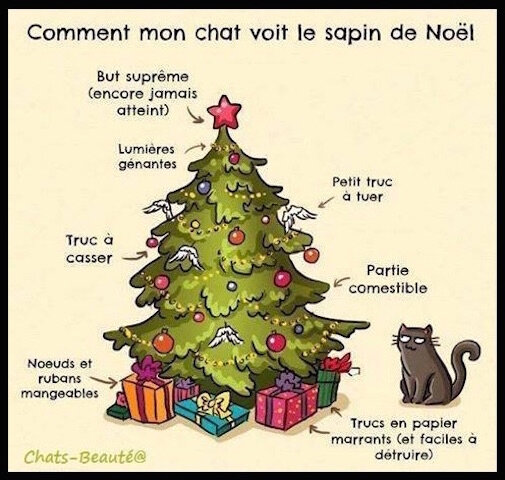 chat sapin