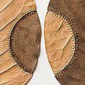 Fil et feuilles de magnolia