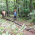 Nov 2014 - débardage au bois des ussiaux (romans sur isère - drôme)