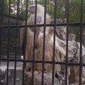 zoo shanghai 045