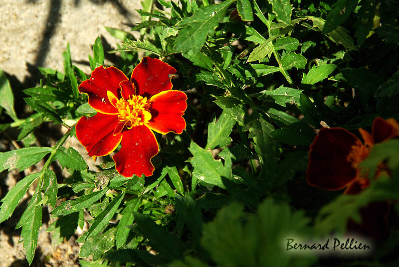 20190622_ jardin_fleurs_