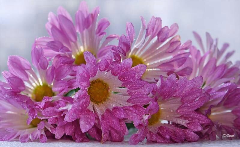 images vintages ou fleuries (56)