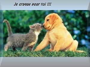 amour_chat_chien_ffr