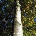 Promenons-nous dans les bois ....