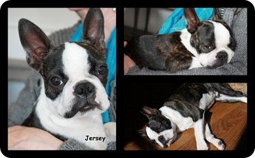 Jersey montage