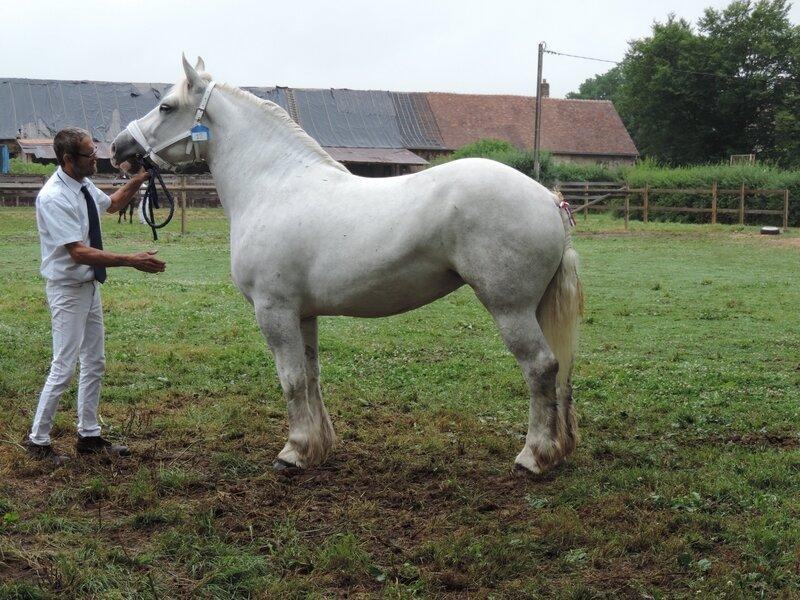 Douce de Tourville - 2 Juillet 2017 - Concours d'élevage local - Menerval (76) - 4e (Non Suitées)