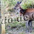 Hebdo_de_Carine_copie_2