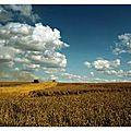 Doc les moissons du futur » – aux bienfaits de l'agroécologie pour nourrir la planète.