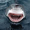 Dresseur de quoi ? de chiens ? non, de requins…