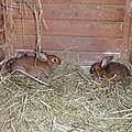 les petites lapines du Moulin