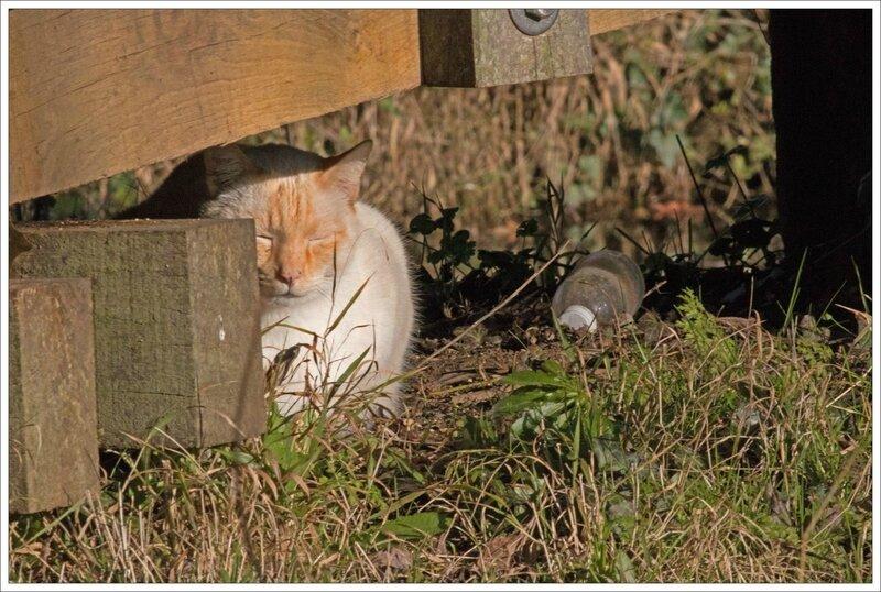ville chat soleil bouteille 080215