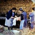 Cochon au lavoir Pelvezy 1989.