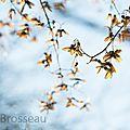 graine-arbre14-01