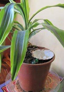 onde dynamiser plantes