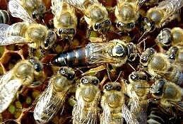 8 abeilles