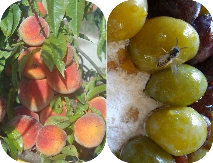 2 fruits