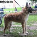 BROUSAILLE